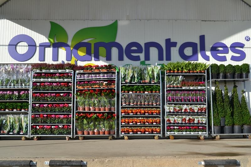 Ornamentales del oeste producci n y comercializaci n de for Plantas aromaticas exterior todo el ano
